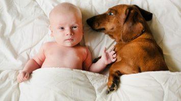 Jaké nebezpečí představují domácí zvířata pro děti
