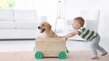 pes k dětem