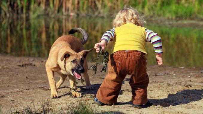 Jak předcházet napadení dítěte psem?