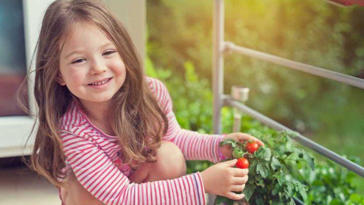 Pěstování zeleniny v bytě na balkóně
