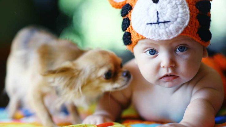 Alergie na kočky a psy u kojenců