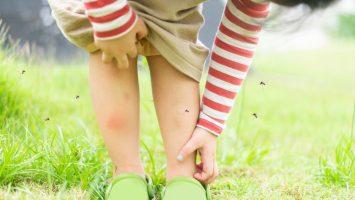 Co dělat proti komárům