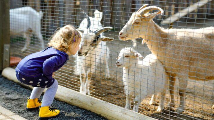 Kam s dětmi za zvířátky